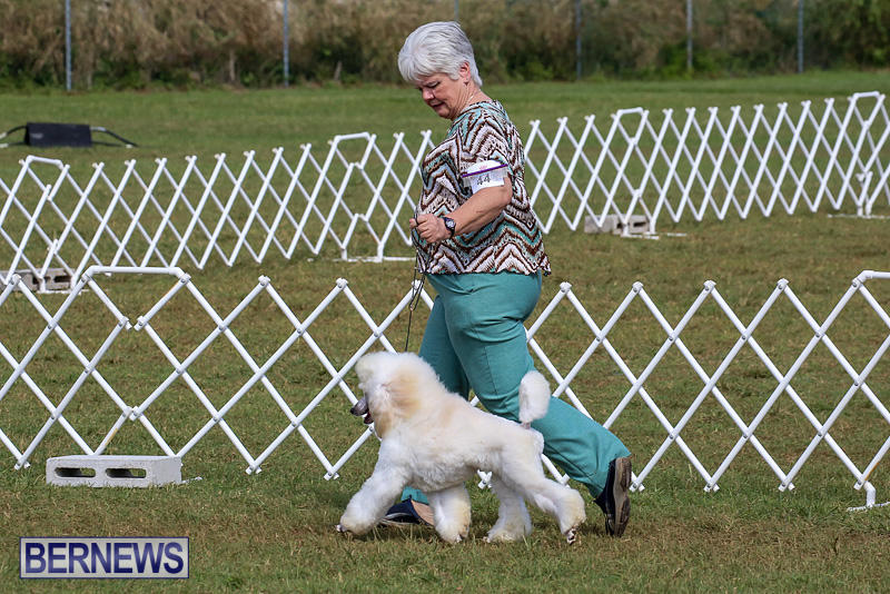 Bermuda-Kennel-Club-Dog-Show-October-23-2016-160