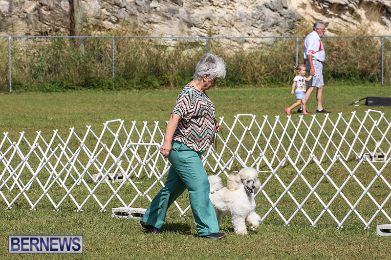 Bermuda-Kennel-Club-Dog-Show-October-23-2016-161