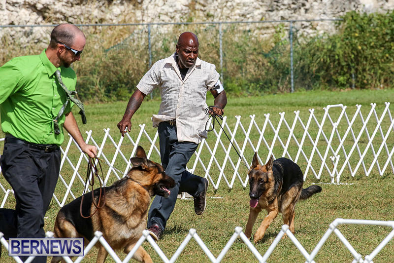 Bermuda-Kennel-Club-Dog-Show-October-23-2016-170