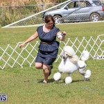 Bermuda Kennel Club Dog Show, October 23 2016-175