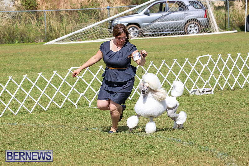 Bermuda-Kennel-Club-Dog-Show-October-23-2016-175