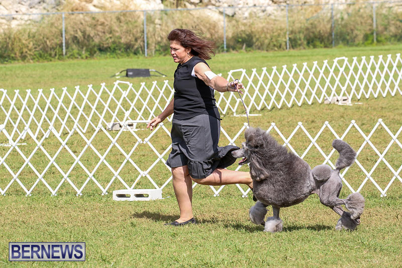 Bermuda-Kennel-Club-Dog-Show-October-23-2016-177