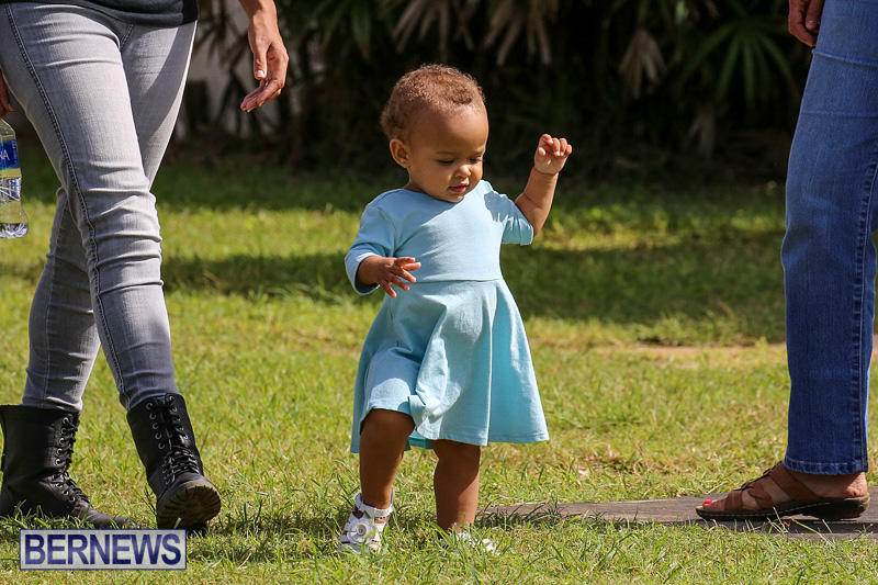Bermuda-Kennel-Club-Dog-Show-October-23-2016-183