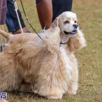 Bermuda Kennel Club Dog Show, October 23 2016-184