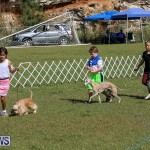 Bermuda Kennel Club Dog Show, October 23 2016-19