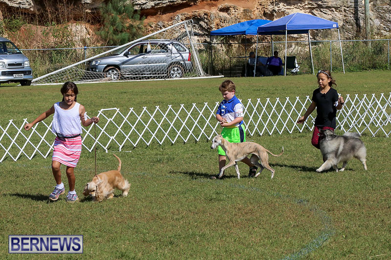 Bermuda-Kennel-Club-Dog-Show-October-23-2016-19