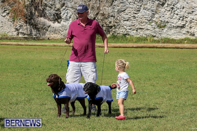 Bermuda-Kennel-Club-Dog-Show-October-23-2016-192