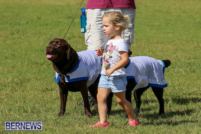 Bermuda-Kennel-Club-Dog-Show-October-23-2016-193