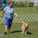 Bermuda Kennel Club Dog Show, October 23 2016-194