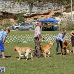 Bermuda Kennel Club Dog Show, October 23 2016-198