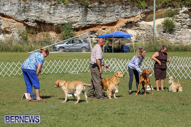 Bermuda-Kennel-Club-Dog-Show-October-23-2016-198