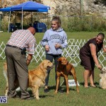 Bermuda Kennel Club Dog Show, October 23 2016-199