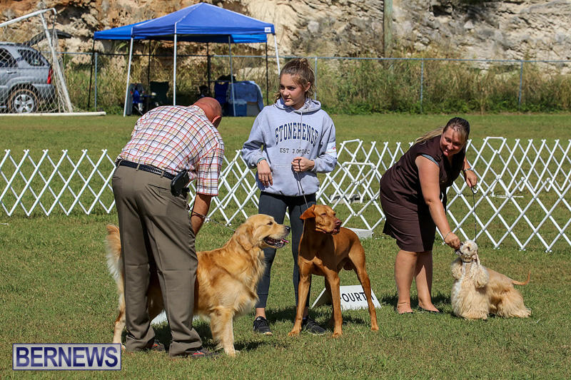 Bermuda-Kennel-Club-Dog-Show-October-23-2016-199