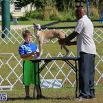 Bermuda Kennel Club Dog Show, October 23 2016-2