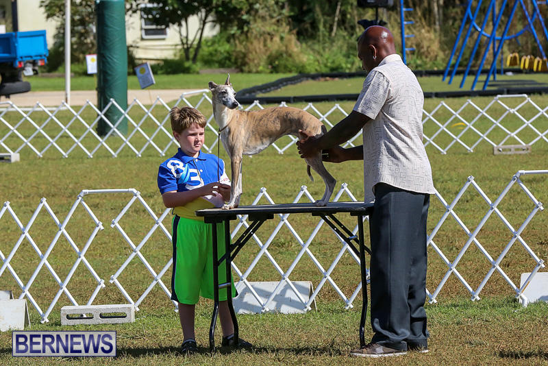 Bermuda-Kennel-Club-Dog-Show-October-23-2016-2