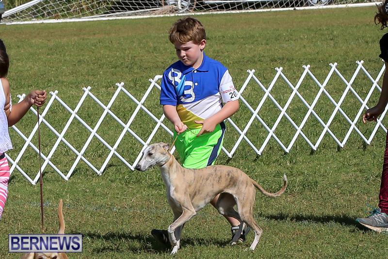 Bermuda-Kennel-Club-Dog-Show-October-23-2016-20