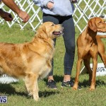 Bermuda Kennel Club Dog Show, October 23 2016-200