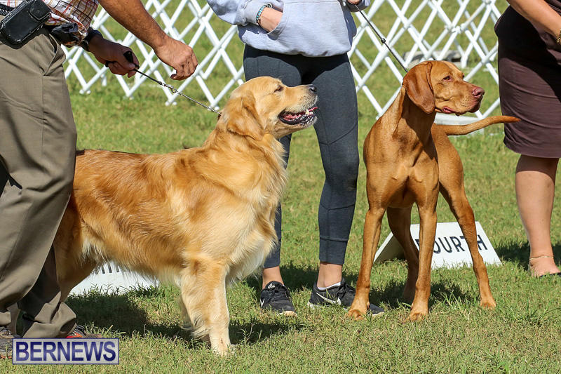 Bermuda-Kennel-Club-Dog-Show-October-23-2016-200