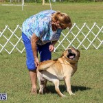 Bermuda Kennel Club Dog Show, October 23 2016-201