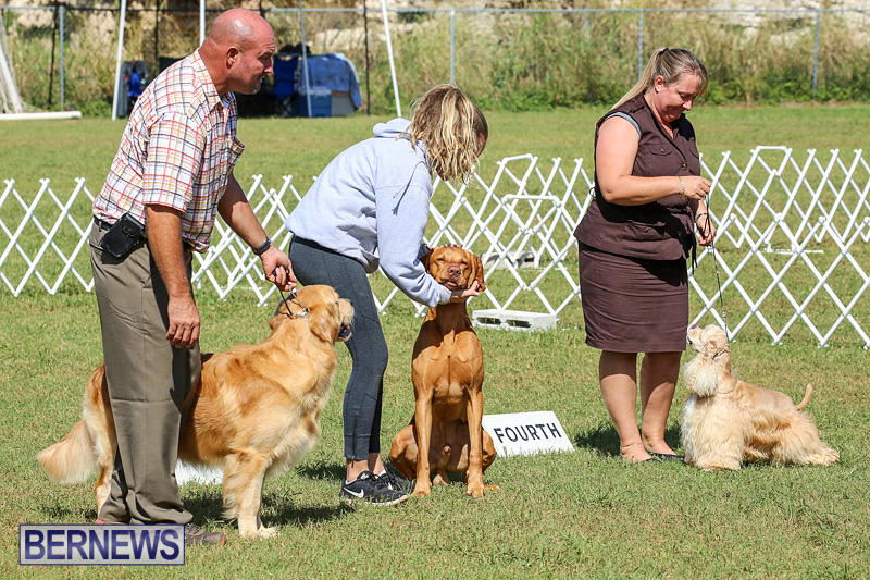 Bermuda-Kennel-Club-Dog-Show-October-23-2016-203