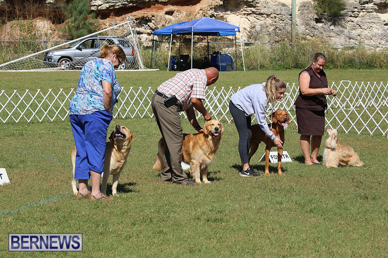 Bermuda-Kennel-Club-Dog-Show-October-23-2016-204
