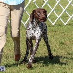 Bermuda Kennel Club Dog Show, October 23 2016-205