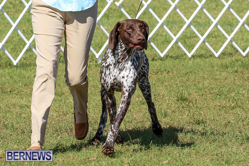 Bermuda-Kennel-Club-Dog-Show-October-23-2016-205