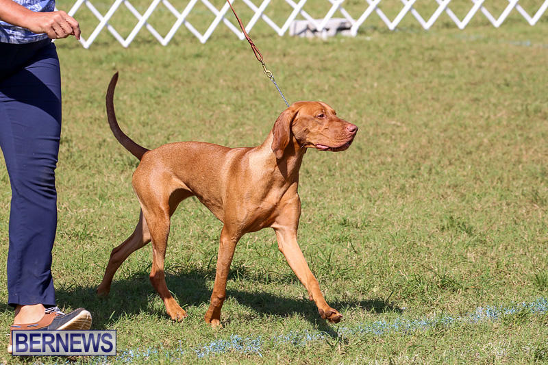 Bermuda-Kennel-Club-Dog-Show-October-23-2016-207