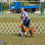 Bermuda Kennel Club Dog Show, October 23 2016-208