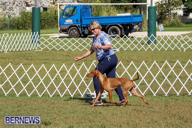 Bermuda-Kennel-Club-Dog-Show-October-23-2016-208