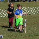 Bermuda Kennel Club Dog Show, October 23 2016-22