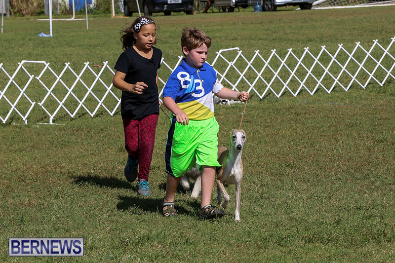 Bermuda-Kennel-Club-Dog-Show-October-23-2016-22