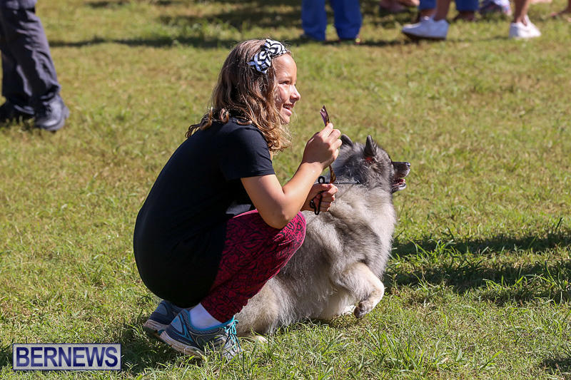 Bermuda-Kennel-Club-Dog-Show-October-23-2016-24