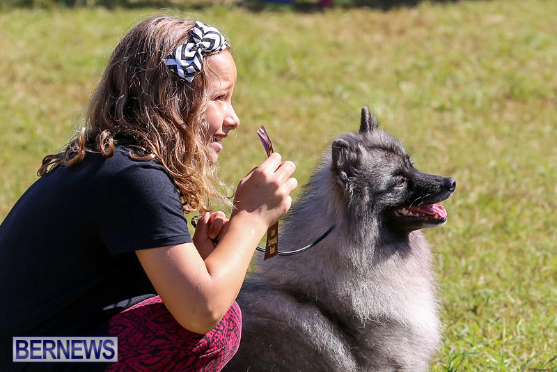 Bermuda-Kennel-Club-Dog-Show-October-23-2016-25