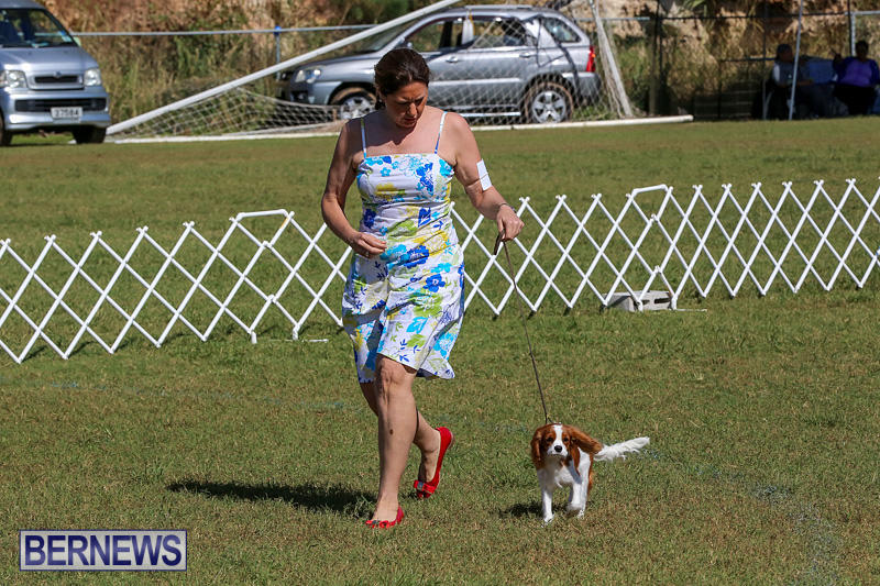 Bermuda-Kennel-Club-Dog-Show-October-23-2016-26