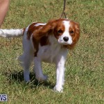 Bermuda Kennel Club Dog Show, October 23 2016-27