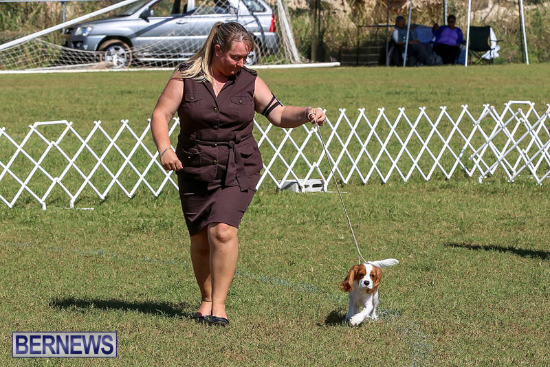 Bermuda-Kennel-Club-Dog-Show-October-23-2016-28