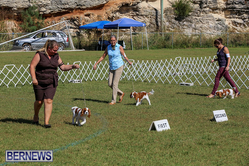 Bermuda-Kennel-Club-Dog-Show-October-23-2016-29
