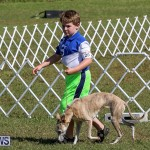 Bermuda Kennel Club Dog Show, October 23 2016-3