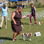 Bermuda Kennel Club Dog Show, October 23 2016-30