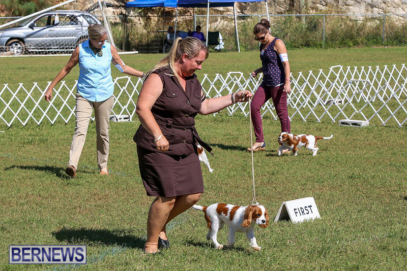 Bermuda-Kennel-Club-Dog-Show-October-23-2016-30