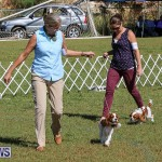 Bermuda Kennel Club Dog Show, October 23 2016-31