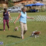 Bermuda Kennel Club Dog Show, October 23 2016-33