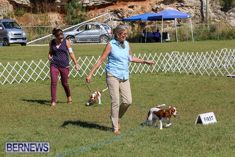 Bermuda-Kennel-Club-Dog-Show-October-23-2016-33