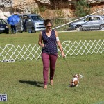 Bermuda Kennel Club Dog Show, October 23 2016-34