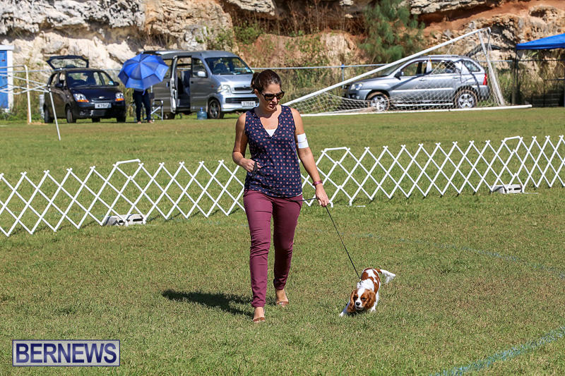 Bermuda-Kennel-Club-Dog-Show-October-23-2016-34