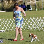 Bermuda Kennel Club Dog Show, October 23 2016-36