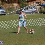 Bermuda Kennel Club Dog Show, October 23 2016-37