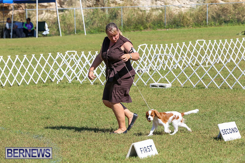 Bermuda-Kennel-Club-Dog-Show-October-23-2016-38