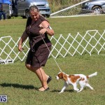 Bermuda Kennel Club Dog Show, October 23 2016-39